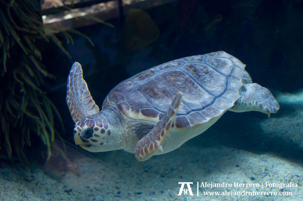 2012-03-15-Visita-oceanografico-cac-valencia-257