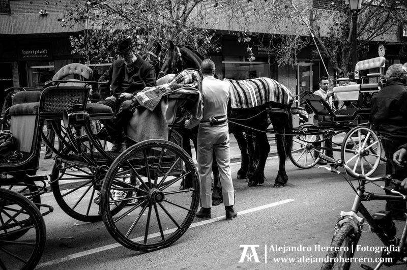 2013-01-17-San-Antonio-Patron-de-los-animales-Valencia-025-BW3