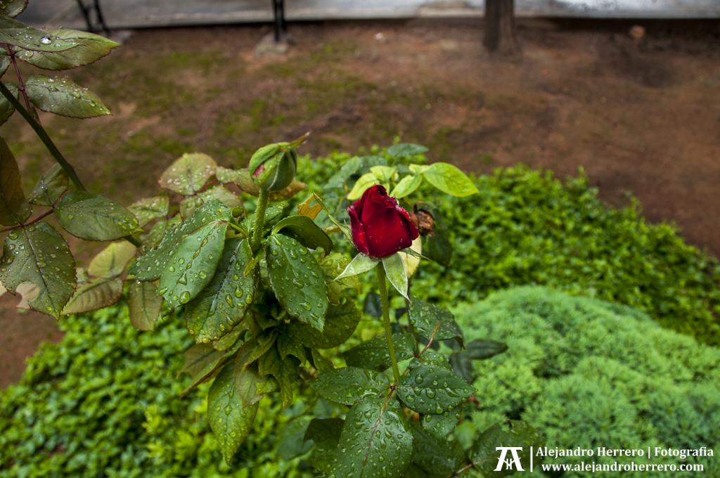 2015-11-01-Visita-a-Silla-Valencia-Cementerio-Pueblo-034